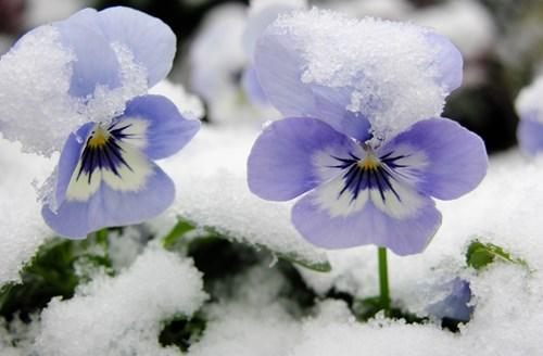 За зима в цветове