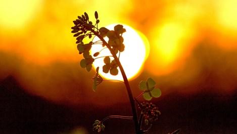 Влияе ли слънцето на продължителността на живота