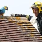 Папагал псува пожарникари, дошли да го спасят.