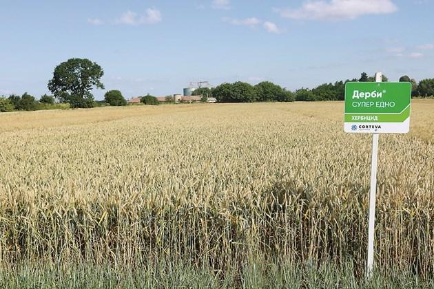 За да се гарантира отлична реколта, трябва да се води ефикасна растителна защита