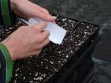 Как да засявате лесно семена