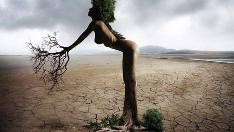 Фън шуй характеристики на жената дърво