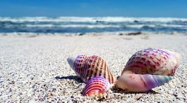 """""""Дейли таймс"""": Слънчев бряг е едно от най-изгодните места в Европа за почивка през лятото"""