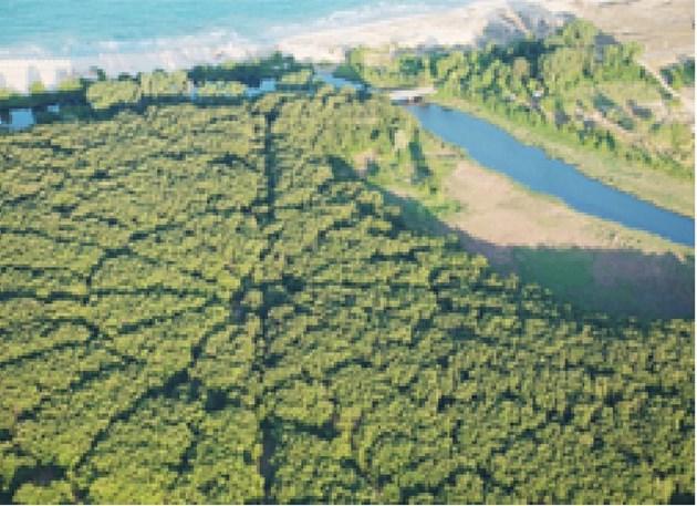 НЛО засажда гора край Приморско
