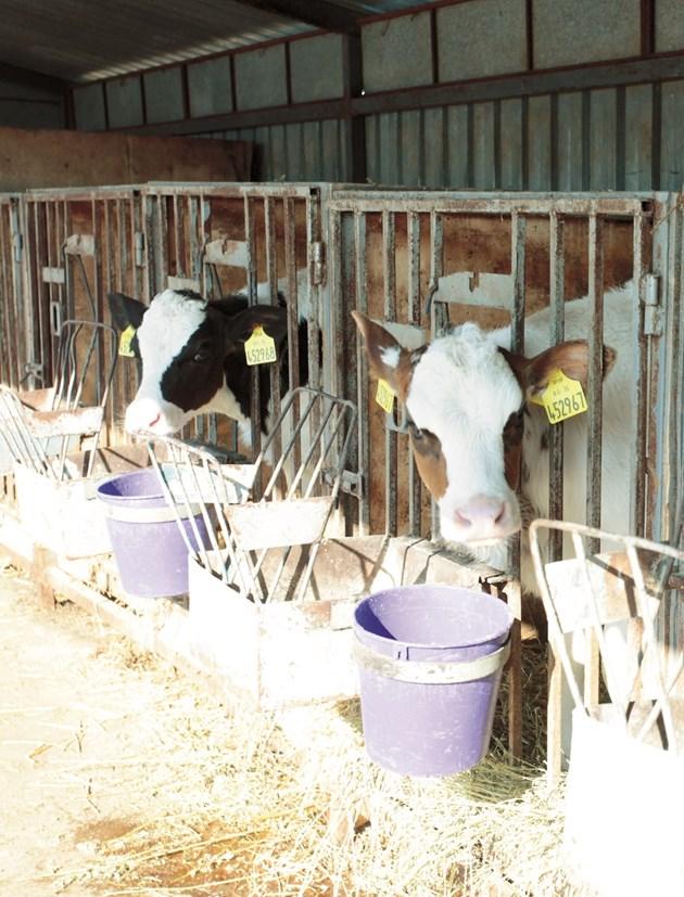 Инвестирането в здравето на животните е може би един от най-големите двигатели на рентабилността.
