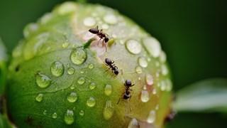 Натурални начини да се отървем от вредните насекоми у дома