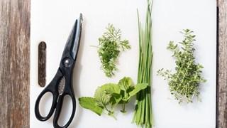 Цонка Даскалова: Мога да усетя коя билка помага за рак