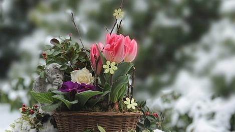 Съвети за цветята през януари