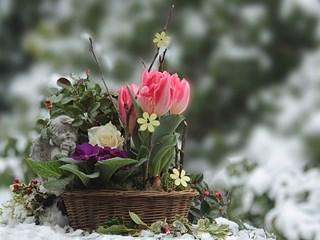 Какво да направим за цветята през януари