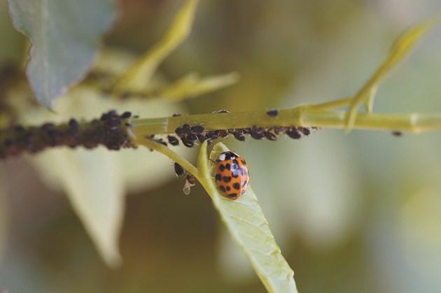 Полезните видове са чувствителни към химични продукти за растителна защита, а трябва да се пазят, защото също регулират вредните