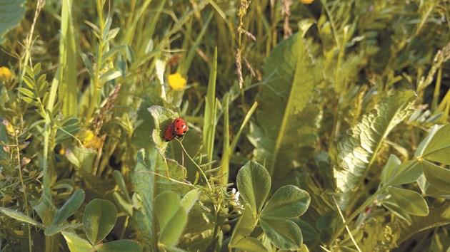 Плевелите, болестите и неприятелите, както и полезните видове, са важна част не само от еко-, но и от агросистемите