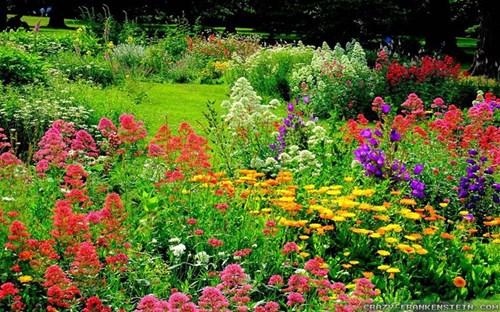 Помислете за цветовата схема при лехите