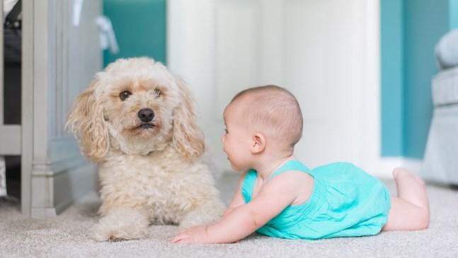 Да взема ли кученце на детето?