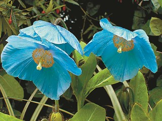 Феерия в синьо