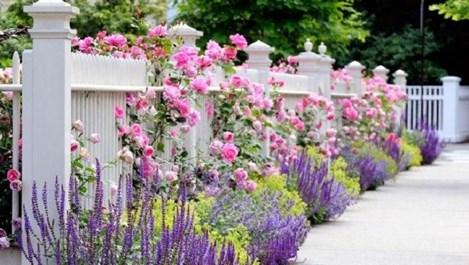 Идеи за цветна градинка (галерия)