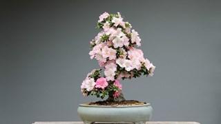 Кои цветя закрилят любовта, зареждат с енергия и пъдят депресията?