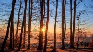 Слънце в Стрелец носи привилегии за тези зодии